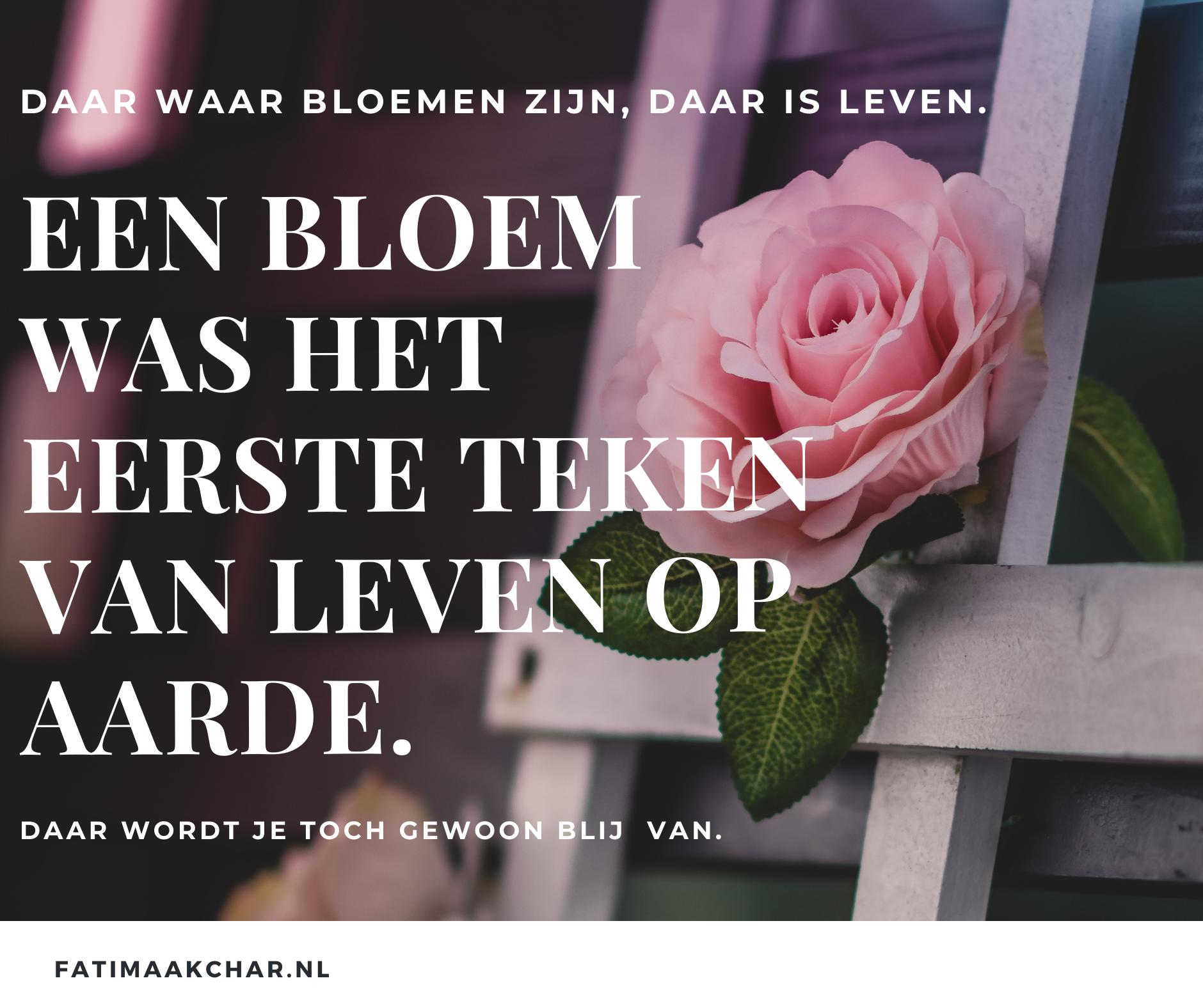 Bloem - roos